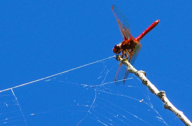 Here Spider Spider