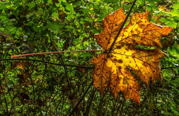 Skewered Leaf