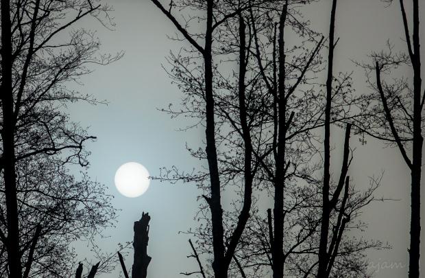 Fog filtering the sun