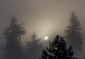 Early morning fog