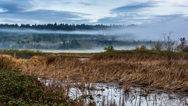 Theler Wetlands, Belfair, WA