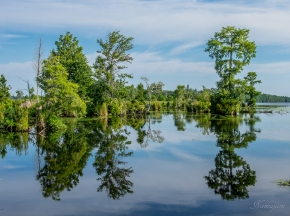 Morning reflection on Lake Hammond in Dismal Swamp